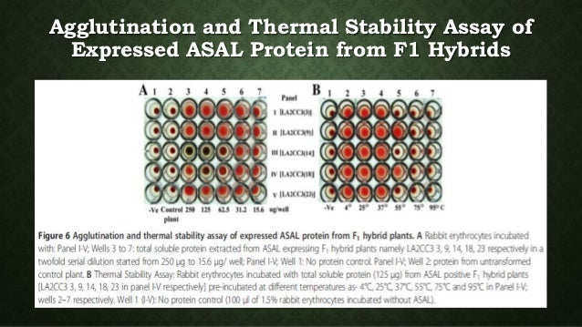 protein thermal stability essay Thermal stability and protein structure argos p these exchanges suggest that thermal stability can be achieved by the addition of many small.
