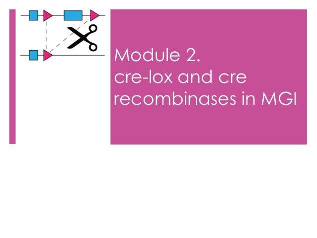 cre lox recombination system pdf