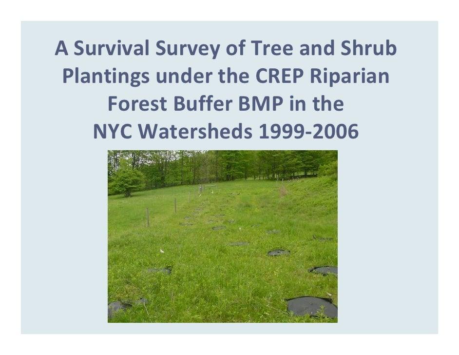 ASurvivalSurveyofTreeandShrub  PlantingsundertheCREPRiparian      ForestBufferBMPinthe     NYCWatersheds...