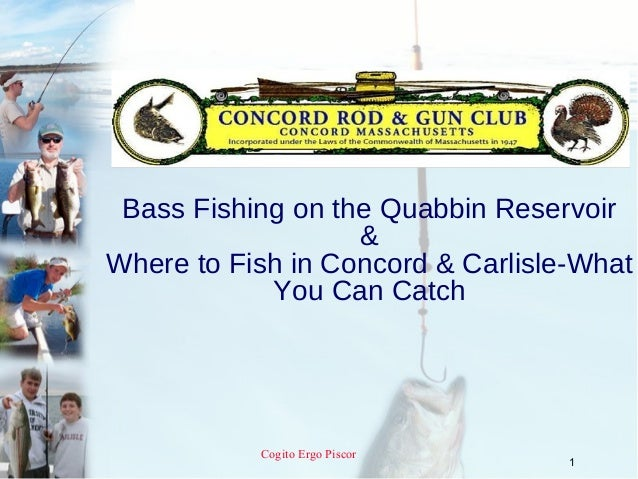 Bass Fishing on the Quabbin Reservoir                   &Where to Fish in Concord & Carlisle-What            You Can Catch...