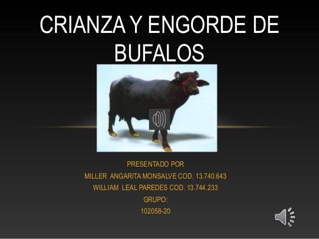 Criadero de bufalos