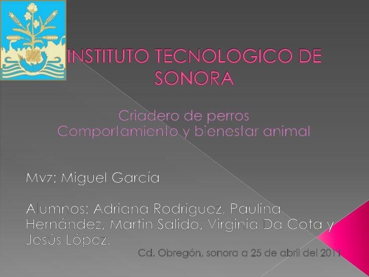 INSTITUTO TECNOLOGICO DE SONORA<br />Criadero de perros<br />Comportamiento y bienestar animal<br />Mvz: Miguel García <br...