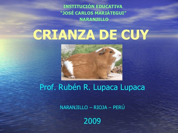 CRIANZA DE CUY Prof. Rubén R. Lupaca Lupaca NARANJILLO – RIOJA – PERÚ 2009 <ul><ul><li>INSTITUCIÓN EDUCATIVA  </li></ul></...