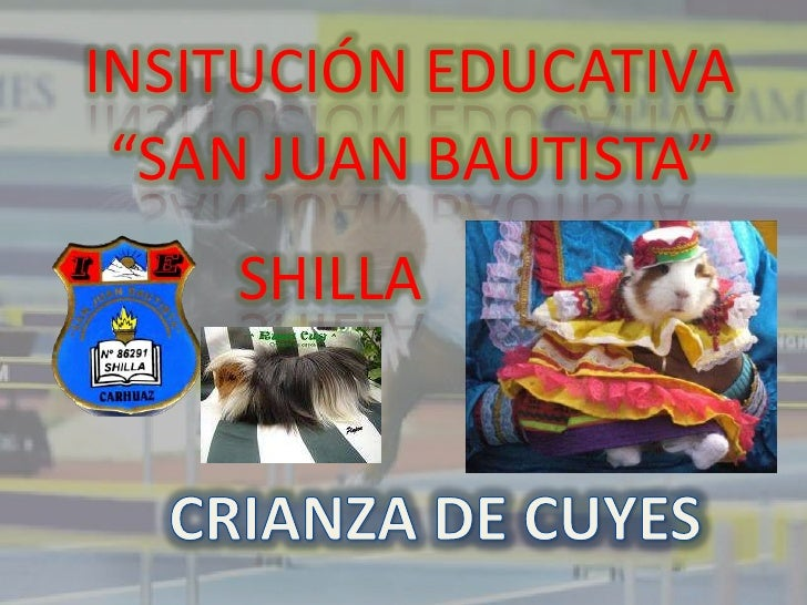 """INSITUCIÓN EDUCATIVA <br />""""SAN JUAN BAUTISTA""""<br />SHILLA<br />CRIANZA DE CUYES<br />"""