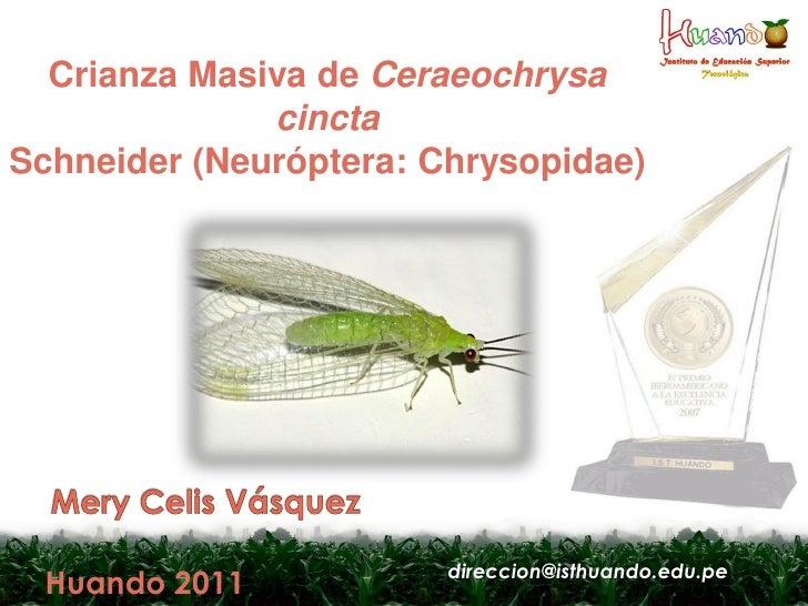 Crianza Masiva de Ceraeochrysa              cinctaSchneider (Neuróptera: Chrysopidae)                        direccion@ist...