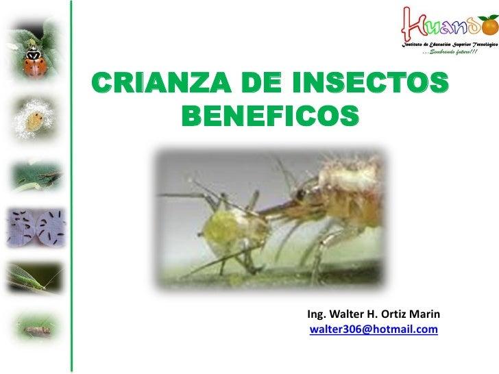 CRIANZA DE INSECTOS     BENEFICOS           Ing. Walter H. Ortiz Marin            walter306@hotmail.com