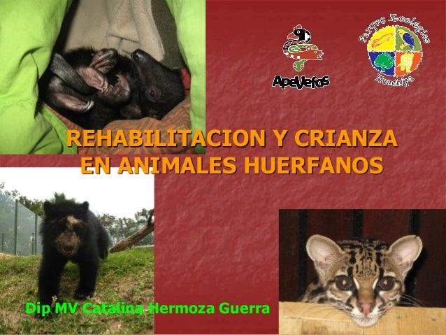 REHABILITACION Y CRIANZA EN ANIMALES HUERFANOS  Dip MV Catalina Hermoza Guerra