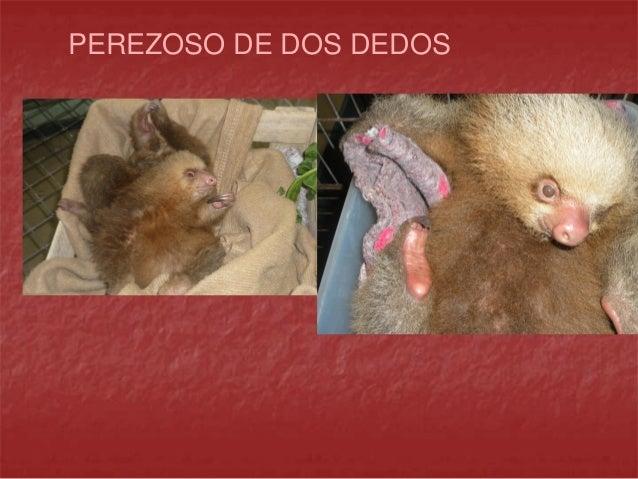 Crianza y manejo en mamiferos silvestres huerfanos