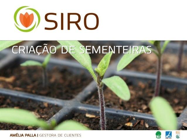 CRIAÇÃO DE SEMENTEIRAS AMÉLIA PALLA | GESTORA DE CLIENTES
