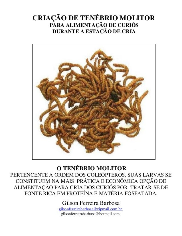 CRIAÇÃO DE TENÉBRIO MOLITOR PARA ALIMENTAÇÃO DE CURIÓS DURANTE A ESTAÇÃO DE CRIA O TENÉBRIO MOLITOR PERTENCENTE A ORDEM DO...