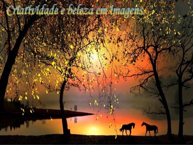 Criatividade e beleza em imagens  c.f.  s -livre