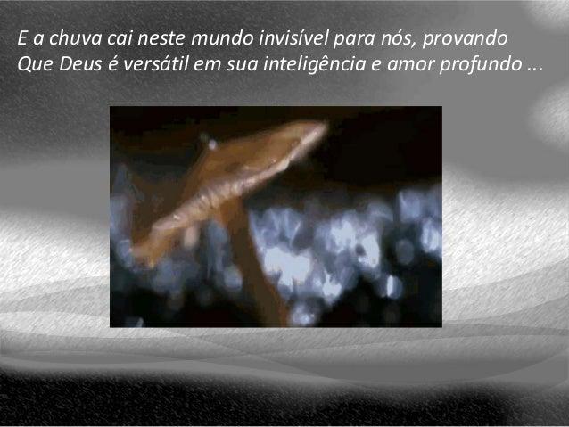 E a chuva cai neste mundo invisível para nós, provando Que Deus é versátil em sua inteligência e amor profundo ...