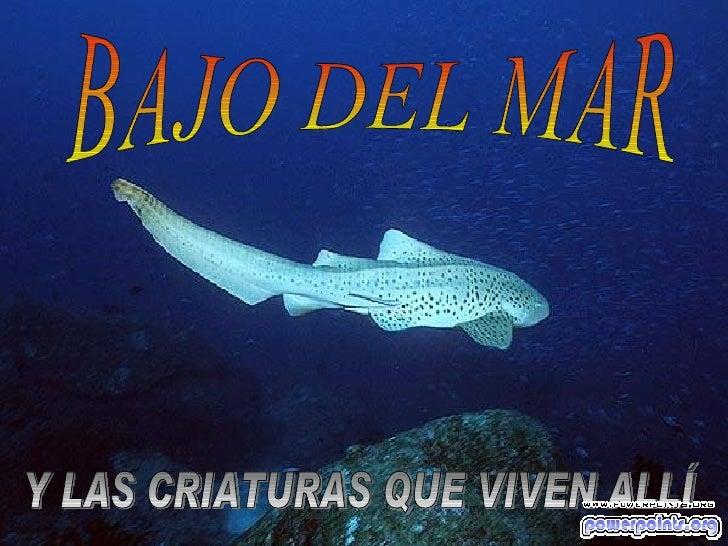 BAJO DEL MAR Y LAS CRIATURAS QUE VIVEN ALLÍ