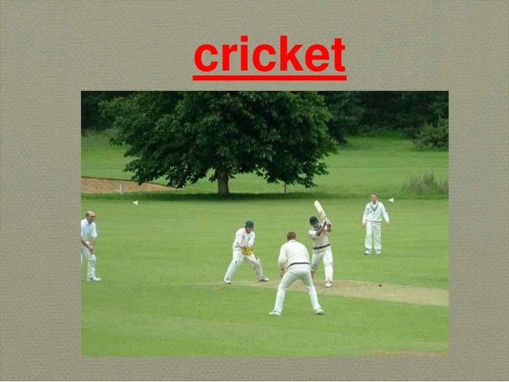 cricket<br />