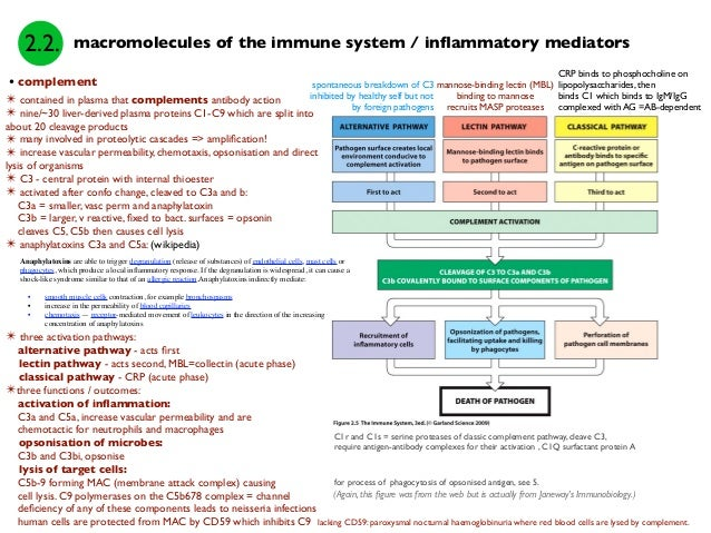 breakdown of the immune system Signals from nervous system influence immune system, study shows date: november 19, 2001 source: university of california - san francisco summary: in a discovery that.
