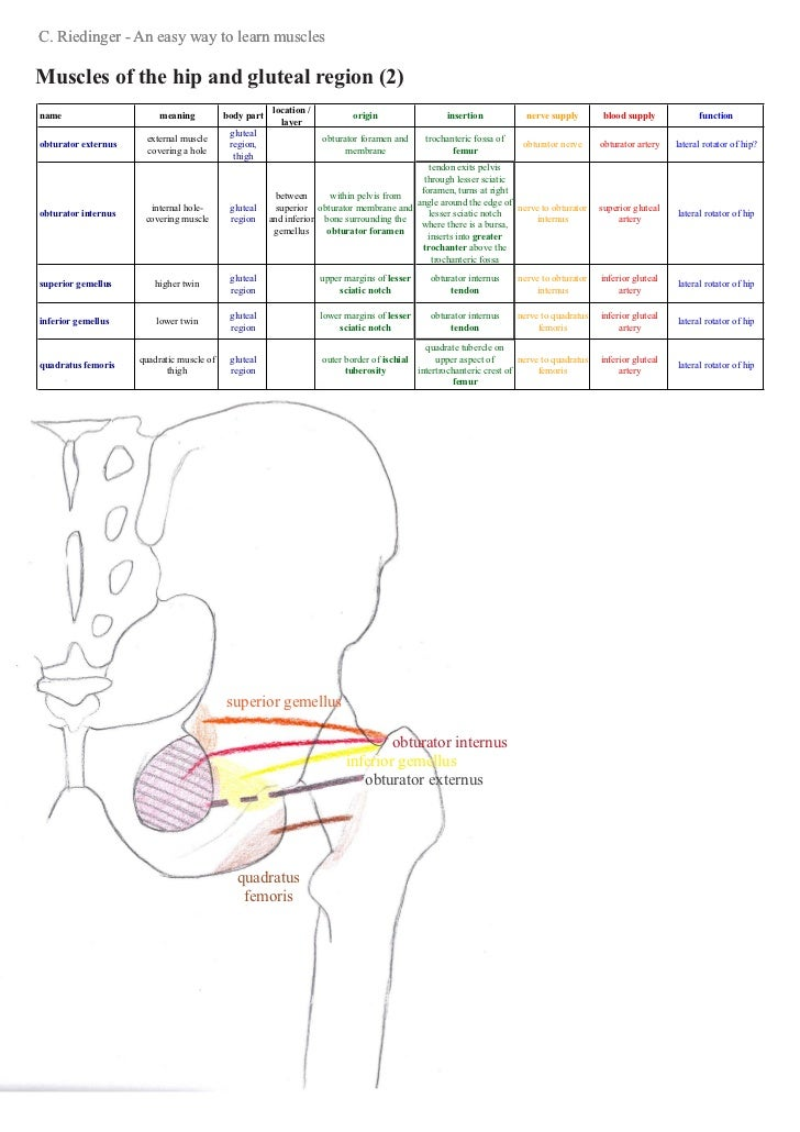 An Easy Way To Learn Hip Muscles