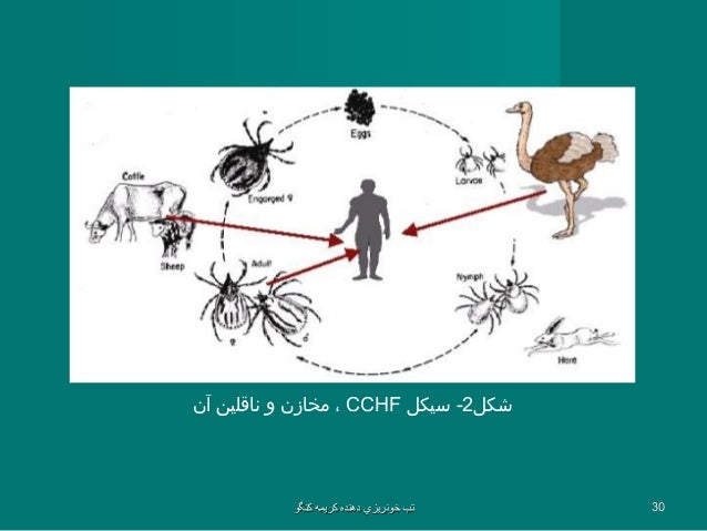 overview of crimean congo hemorrhagic fever essay Viral hemorrhagic fevers are a group of illnesses caused by four families of viruses including ebola and marburg summary viral hemorrhagic fevers crimean-congo hemorrhagic fever (cchf) (centers for disease control and prevention.