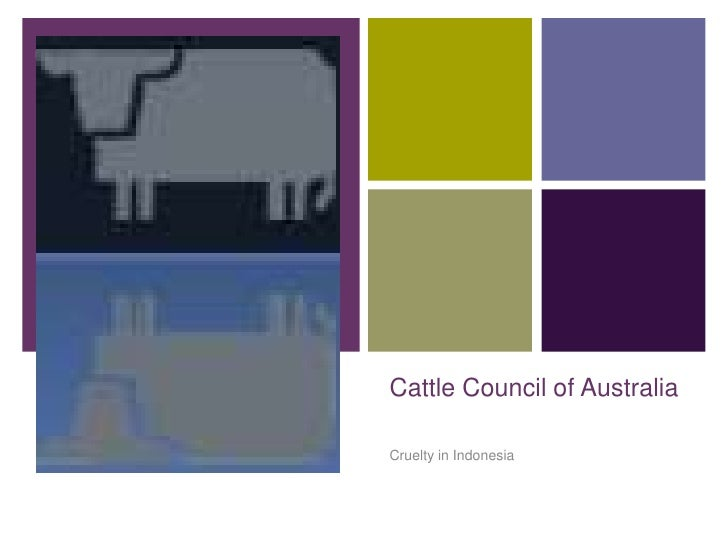 +    Cattle Council of Australia    Cruelty in Indonesia