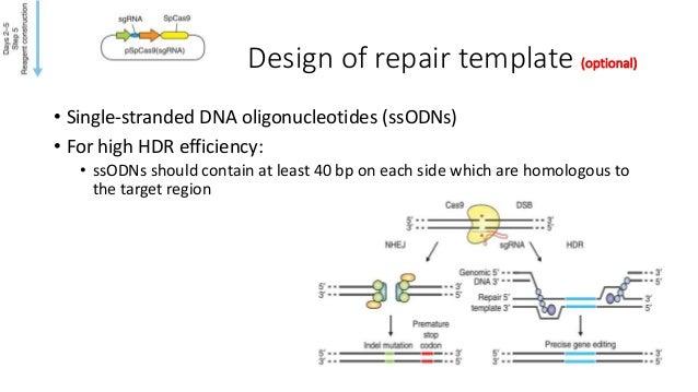 Plasmid construct validations • Step 5B xii