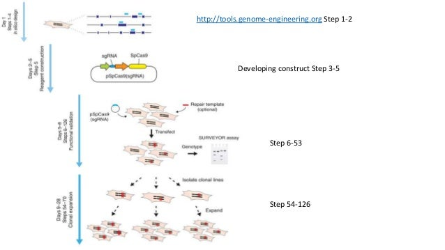 http://tools.genome-engineering.org Step 1-2 Developing construct Step 3-5 Step 6-53 Step 54-126