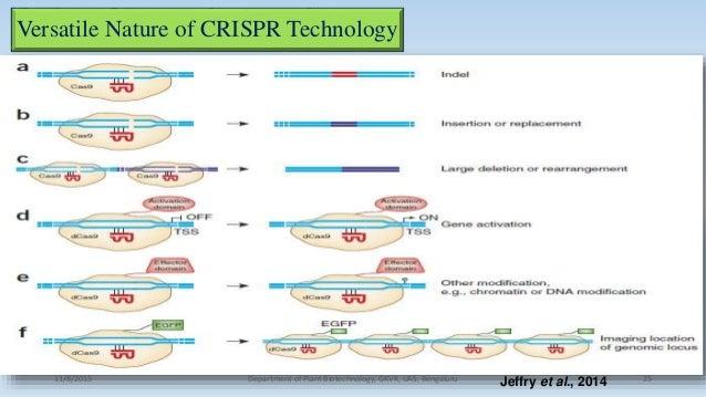 Versatile Nature of CRISPR Technology 11/8/2015 Department of Plant Biotechnology, GKVK, UAS, Bengaluru 25Jeffry et al., 2...