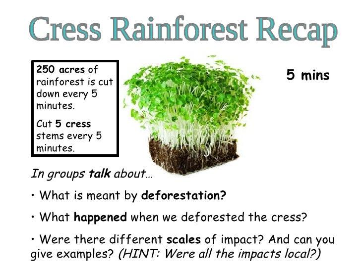 Cress Rainforest Recap <ul><li>In groups  talk  about…  </li></ul><ul><li>What is meant by  deforestation? </li></ul><ul><...