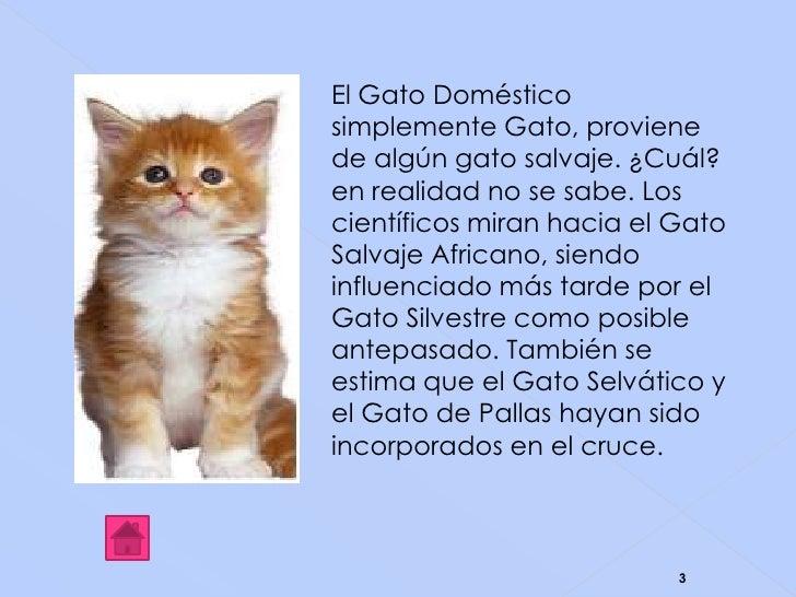 Los animales - El gato en casa ...