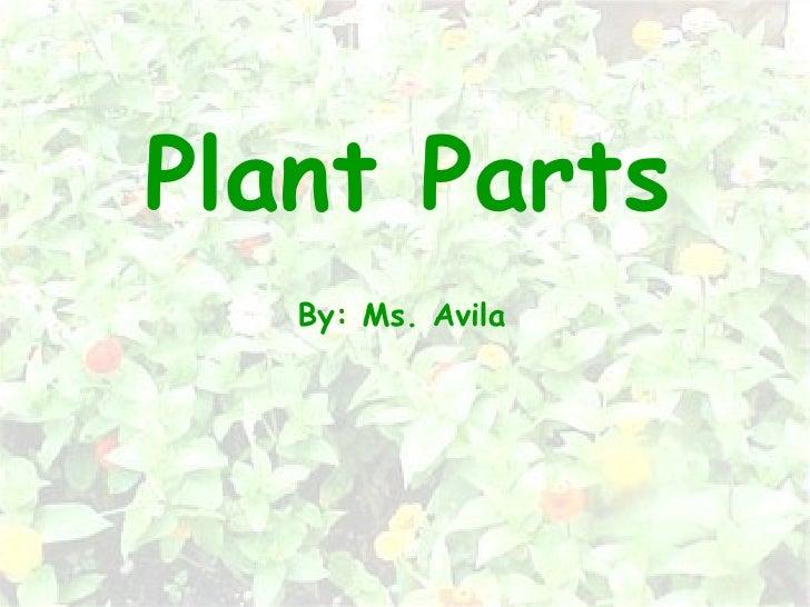 Plant Parts By: Ms. Avila