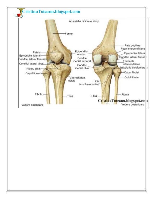 Cristina toteanu Anatomia corpului uman