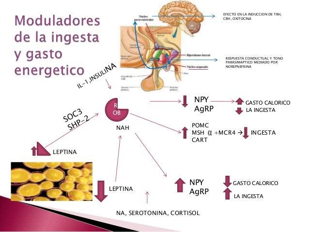 OBESIDAD Y SINDROME METABOLICO EN PEDIATRIA: Criterios y
