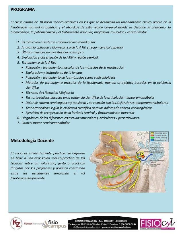 Región craneomandibular, cervical superior y control motor (CRN)