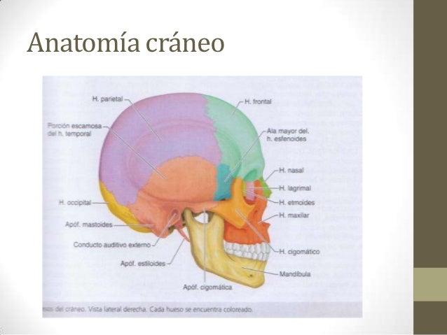 Cráneo, cabeza y cara exploración física