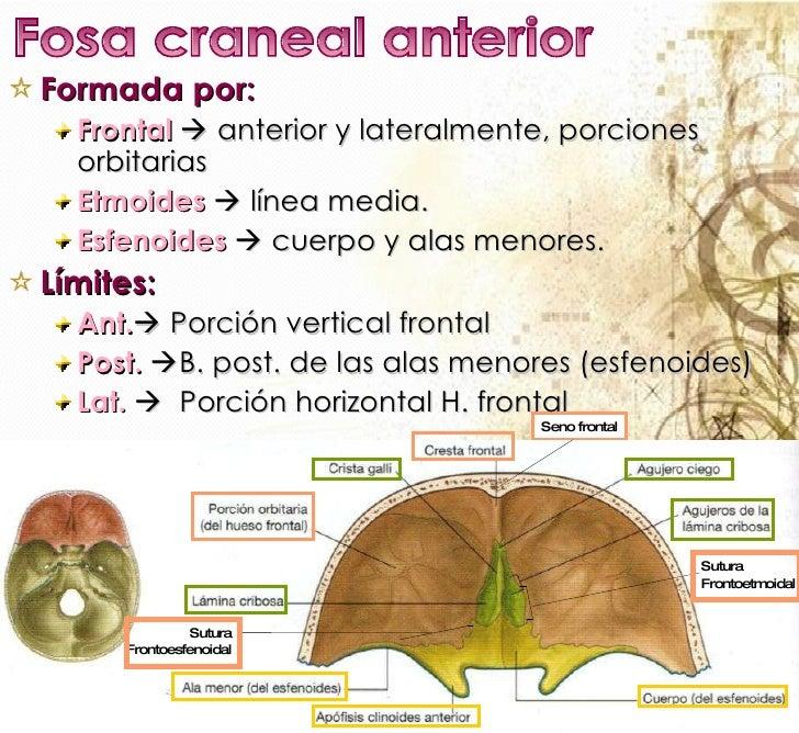 CRANEO EN GENERAL