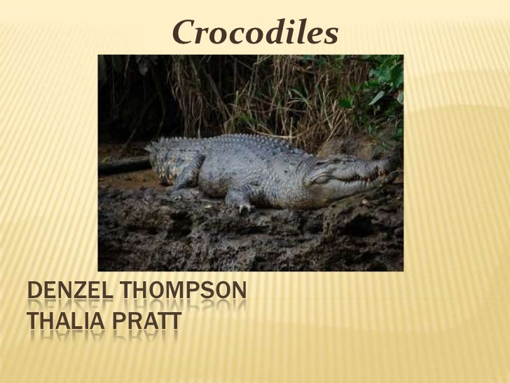 CrocodilesDENZEL THOMPSONTHALIA PRATT