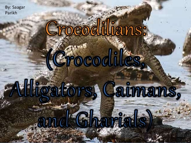an introduction to the alligators and crocodiles An introduction to phylogenetic analysis  alligators and crocodiles look very similar  introduction phylogenetic analysis in workshop/conference of the .