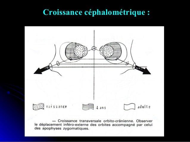 Dépendance / interdépendance des croissances maxillaire et mandibulaire : Le maxillaire est appendu à la partie antérieure...