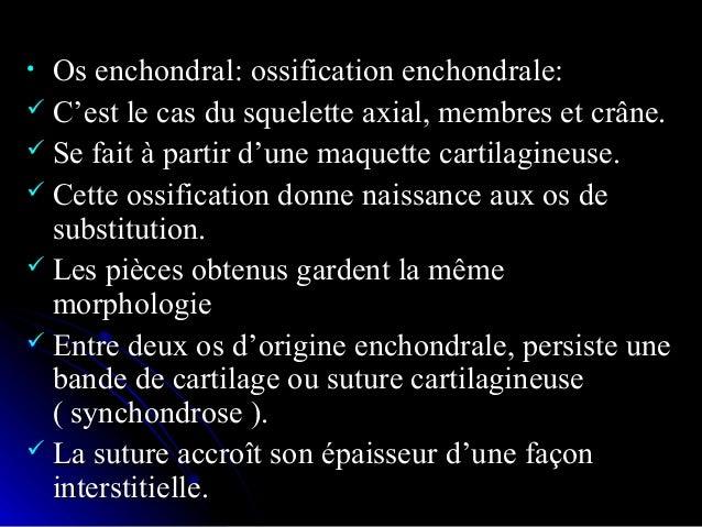Développement d'un os long:Développement d'un os long: I, Ébauche cartilagineuse. - II, première couche osseuse (1) formée...