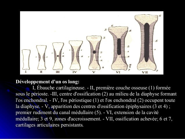 Ossification mixte:Ossification mixte:ex:mandibule,claviculeex:mandibule,clavicule le remodelage osseux:le remodelage osse...