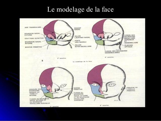 Le cloisonnement de la bouche primitiveLe cloisonnement de la bouche primitive 1.Cavité nasale1.Cavité nasale 2.Palais pri...