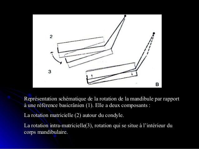 croissance prénatale ducroissance prénatale du chondrocrânechondrocrâne Le squelette osseux de la base estLe squelette oss...