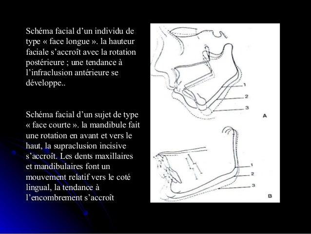 Développement du chondrochrâneDéveloppement du chondrochrâne Croissance prénatale du chondro-crâne:Croissance prénatale d...