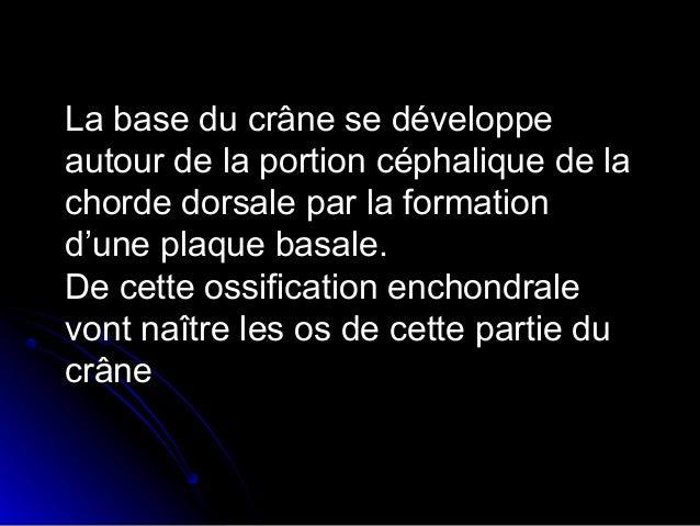 Croissance de la voûte du crâne: calotte crânienne  Rappel anatomiqueRappel anatomique::  Vue endocrânienne:Vue endocrân...