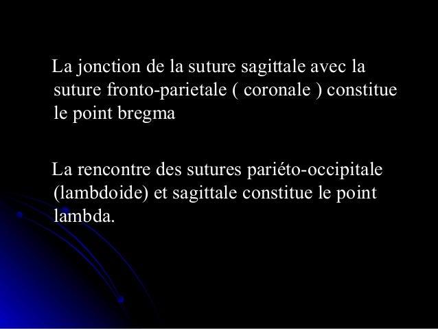 A partir du 4eme mois l'extrémité céphaliqueA partir du 4eme mois l'extrémité céphalique s'humanise.s'humanise.  Formatio...
