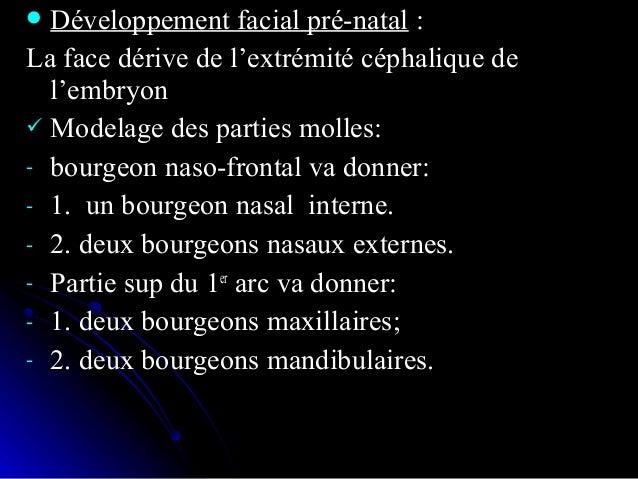  la phylogenèse et l'embryogenèse de la mandibule sont trèsla phylogenèse et l'embryogenèse de la mandibule sont très par...