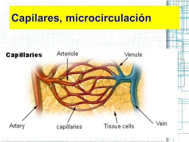 C roja Caracteristicas de vasos sang y capilares