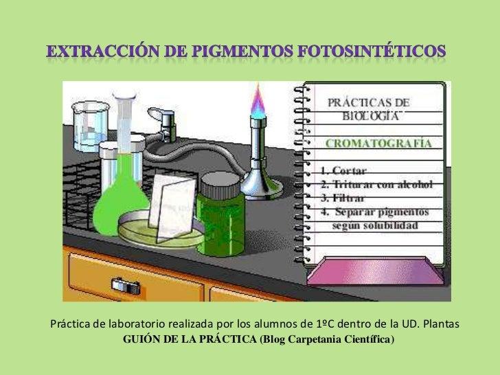 Práctica de laboratorio realizada por los alumnos de 1ºC dentro de la UD. Plantas              GUIÓN DE LA PRÁCTICA (Blog ...