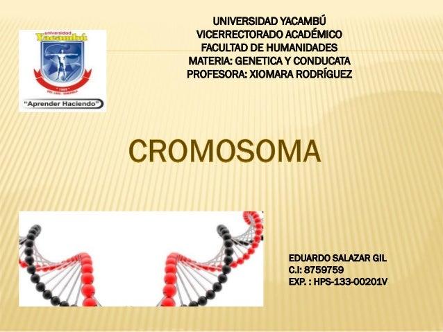 UNIVERSIDAD YACAMBÚ VICERRECTORADO ACADÉMICO FACULTAD DE HUMANIDADES MATERIA: GENETICA Y CONDUCATA PROFESORA: XIOMARA RODR...