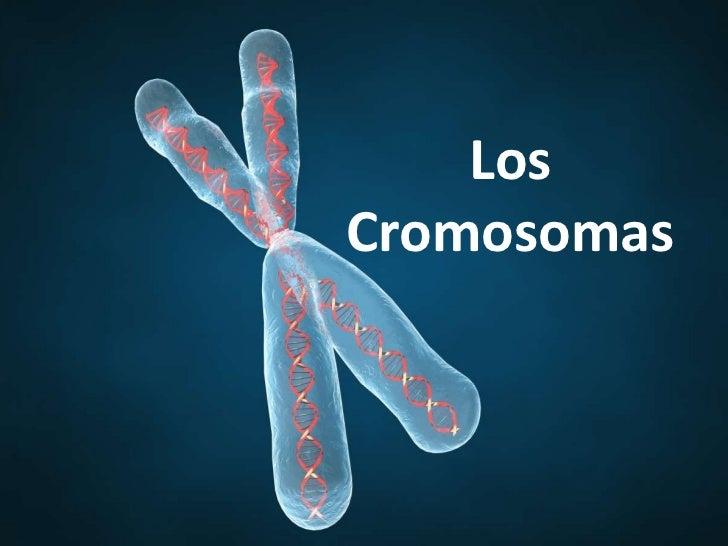 LosCromosomas
