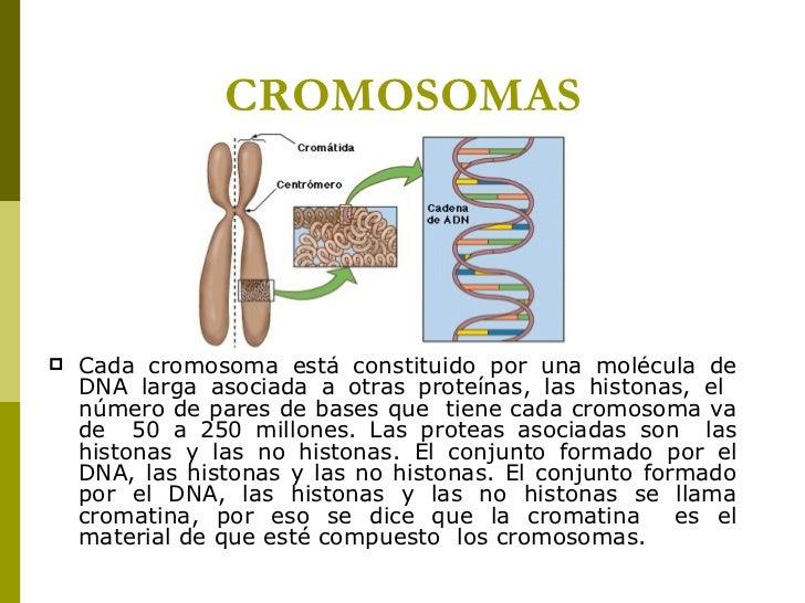 CROMOSOMAS <ul><li>Cada cromosoma está constituido por una molécula de DNA larga asociada a otras proteínas, las histonas,...