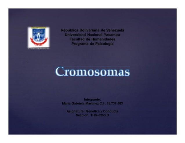 Un cromosoma es una estructura organizada de ADN y proteína que se encuentra en las células. Se trata de una sola pieza de...